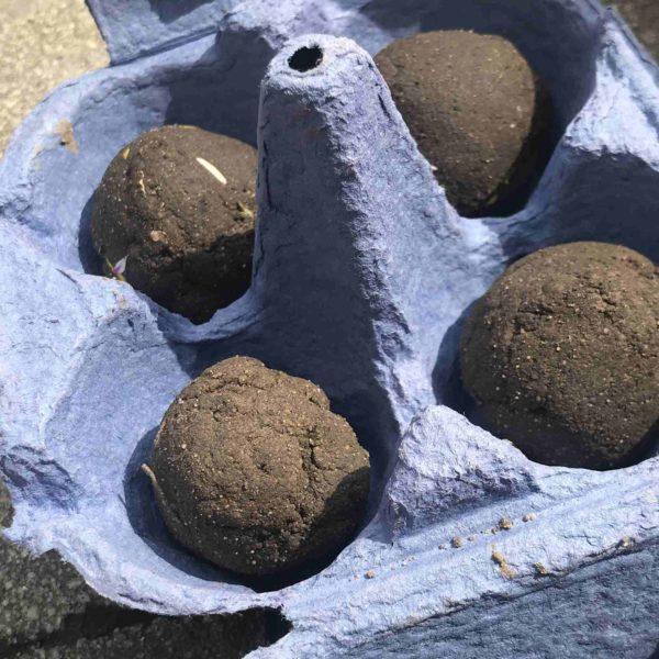 Saatkugeln DIY für Kinder